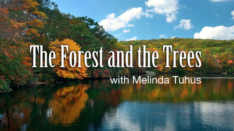 WPKN Radio 89.5-FM: The Forest And The Trees with Melinda Tuhus | Every 2nd Saturday at 9:30 AM